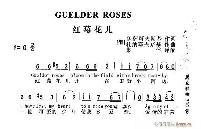 GUUELDER ROSES(十字及以上)1